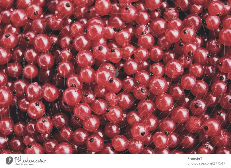 Johannisbeeren Natur Sommer rot Farbe klein Garten Gesundheit Frucht Lebensmittel glänzend frisch Ernährung süß viele rund rein