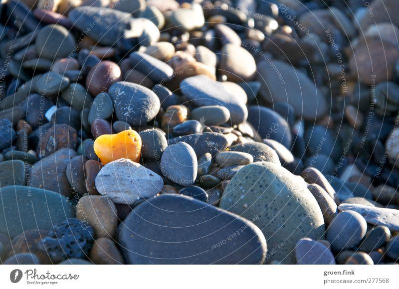 herz aus stein Strand Küste Stein Herz gelb grau Farbfoto Außenaufnahme Nahaufnahme Schwache Tiefenschärfe