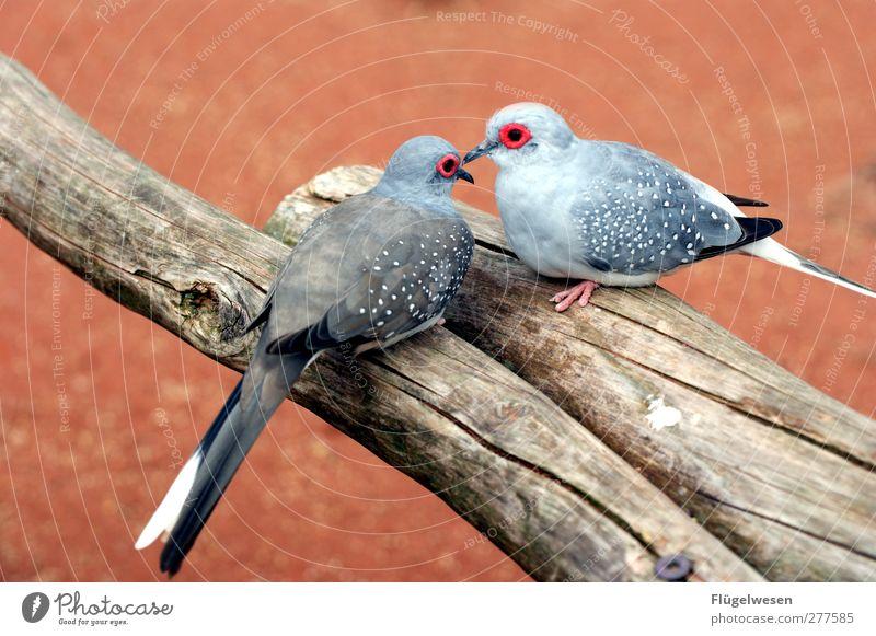 Tierliebe Haustier Wildtier Vogel Tiergesicht Flügel Krallen Zoo Streichelzoo 2 Tierpaar Glück Liebe Verliebtheit Romantik fliegen Feder Baumstamm Ast Farbfoto