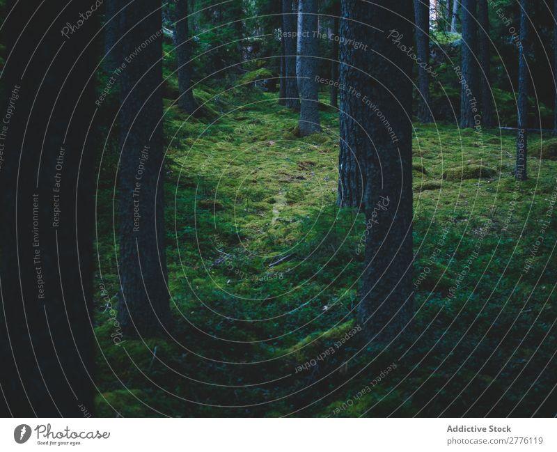 Zauberhölzer in dunkel Wald moosbedeckt Zauberei u. Magie Natur Landschaft ruhig geheimnisvoll Märchen Menschenleer malerisch mystisch Fee magisch grün hell