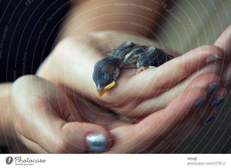 RIP kleiner Vogel Tier Tierjunges Wildtier niedlich Totes Tier