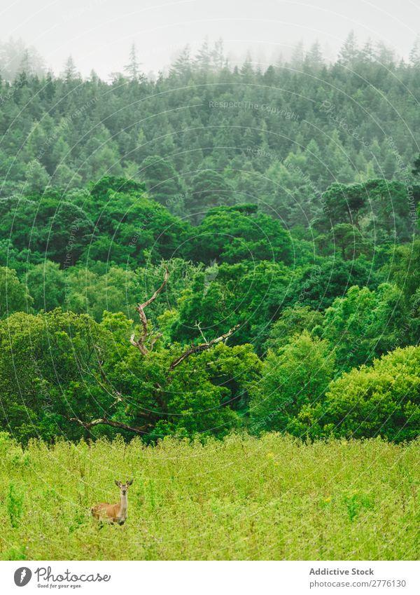 Grüne Mischwälder Wald üppig (Wuchs) Hirsche grün Landschaft Tierwelt national natürlich Wildnis Park ruhig Beautyfotografie Abenteuer Jahreszeiten Sommer