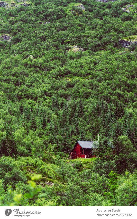 Haus im Wald am Berghang Berge u. Gebirge abgelegen friedlich ruhig Farbe Wetter Immergrün Gelände Landschaft Natur Gebäude Außenseite üppig (Wuchs) Idylle
