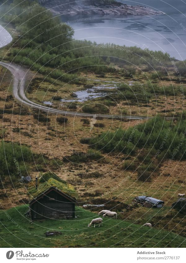 Haus in abgelegener Lage Landschaft Weide ländlich Zauberei u. Magie Tal Berge u. Gebirge alt malerisch weidend Idylle Landwirtschaft Aussicht Außenseite Rind