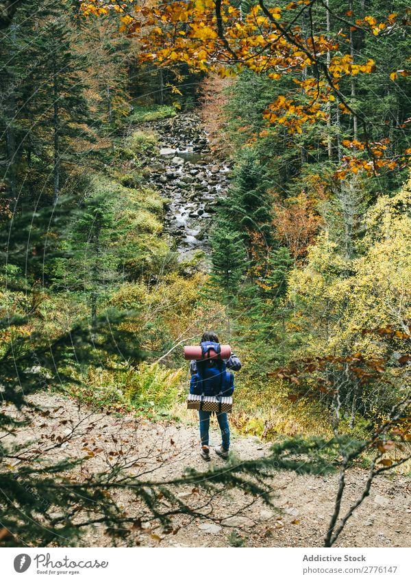 Backpacker im herbstlichen Wald Mensch Herbst Rucksacktourismus Sightseeing Landschaft Aussicht