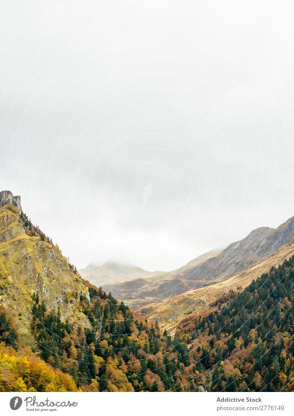 Tal mit Bäumen in den Bergen Berge u. Gebirge Reichweite Wald Landschaft Panorama (Bildformat) Gelände Immergrün Ferien & Urlaub & Reisen reisend Abenteuer