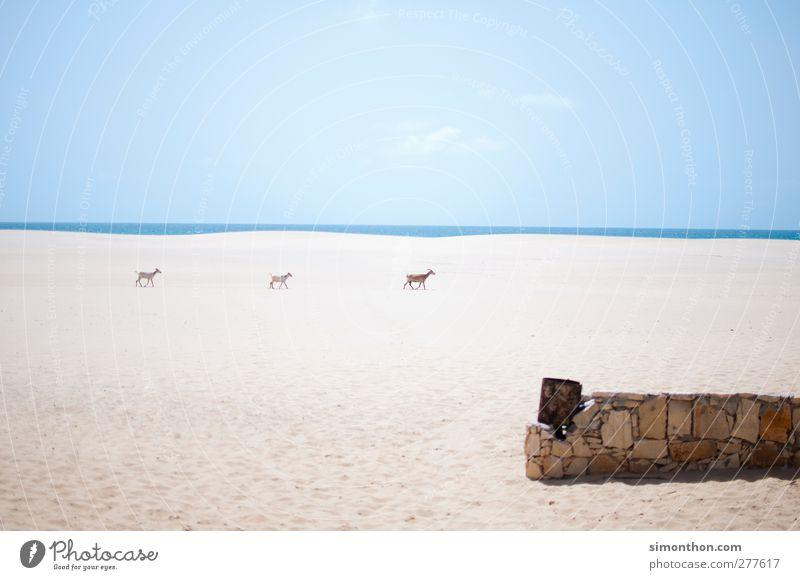 ziegen Natur Ferien & Urlaub & Reisen Einsamkeit ruhig Ferne Freiheit Kunst Horizont Zeit Klima Freizeit & Hobby Ordnung Geschwindigkeit Abenteuer Perspektive