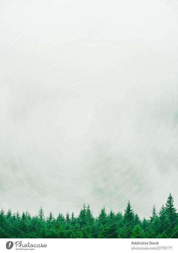Nebel, der über Baumkronen läuft. Landschaft Wald nadelhaltig magisch Abenteuer Zauberei u. Magie friedlich spukhaft Jahreszeiten Natur ländlich Fluggerät