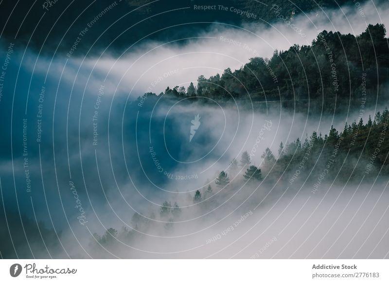 Bäume auf den Bergen fallen bei Nebel ab. Landschaft Berge u. Gebirge Panorama (Bildformat) Wald Morgen geheimnisvoll Gelassenheit Idylle Immergrün harmonisch