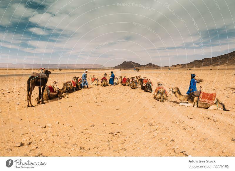 Karawane in geräumiger Wüste Karavane Kamel einheimisch Tourismus Natur Verkehr Ausflug