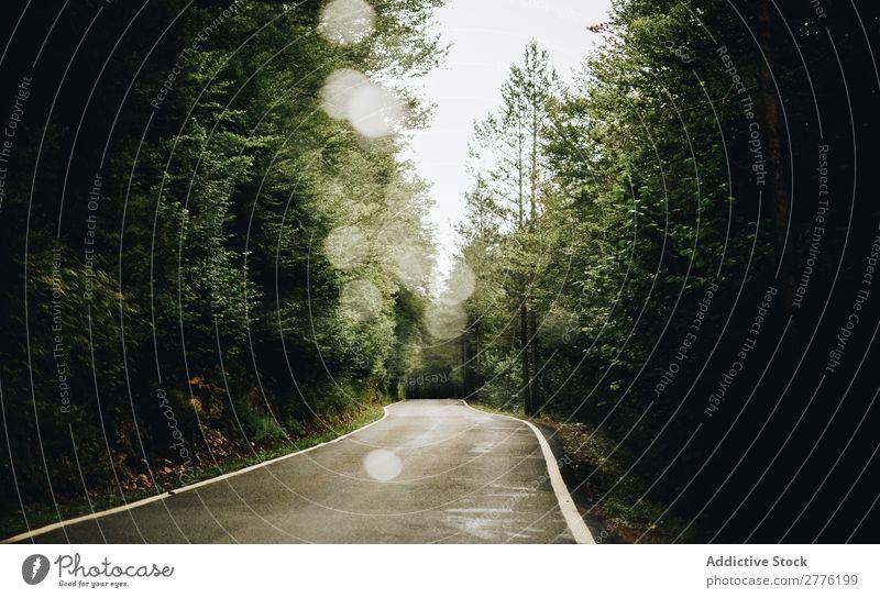 Eine einsame Straße Wald Baum Einsamkeit Natur grün Morgen Szene Sommer Ausflug Sonnenlicht Park Mysterium natürlich Wetter Asphalt Menschenleer Wege & Pfade