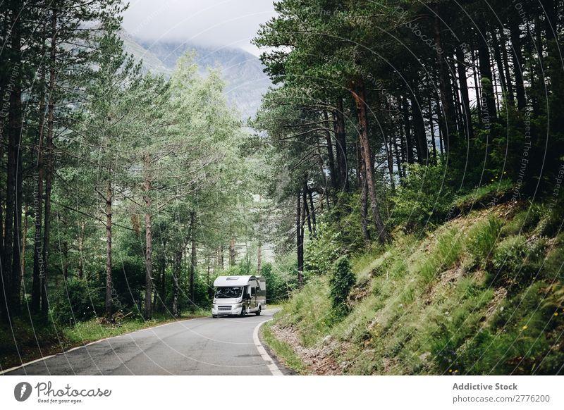 Lkw-Fahrten auf Waldwegen Lastwagen Straße Verkehr Fahrzeug PKW Landschaft Fracht Spedition Laufwerk Anhänger Holz Baum Natur Ausritt Asphalt Weg Hügel