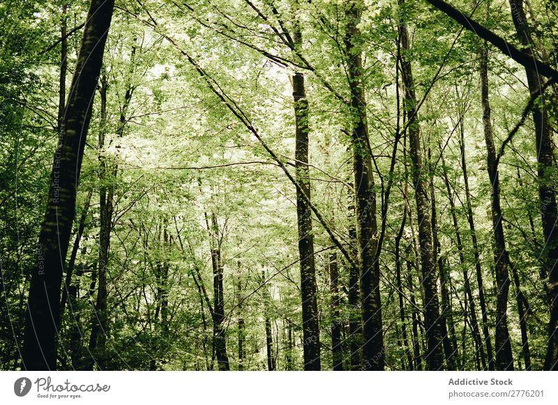 Ein grüner Wald Menschenleer Baum Natur Landschaft Pflanze Tag Blatt Sonnenlicht Sommer natürlich Sonnenstrahlen Jahreszeiten stumm schön Holz Morgen hell