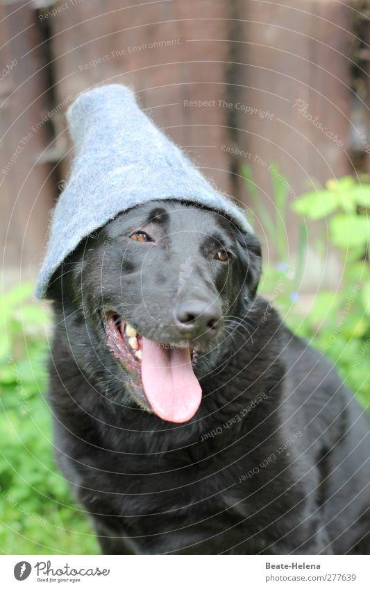 Auf den Hund gekommen Wald warten grau grün rosa schwarz Vertrauen Freundschaft ästhetisch Zufriedenheit skurril Hundekopf Hundeblick Hut Waldlichtung Hundemode