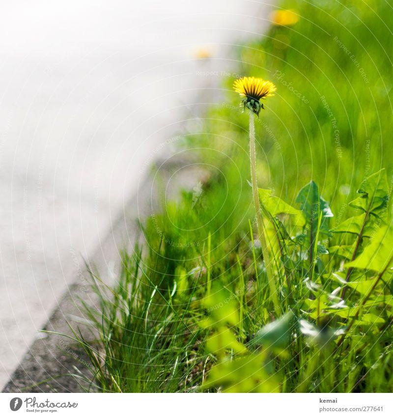 Dem Straßenrand seine Vegetation Natur grün Sommer Pflanze Blume gelb Umwelt Wiese Wärme Gras grau Wachstum frisch Schönes Wetter Asphalt