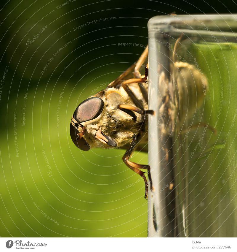 heute schon gebremst? grün Tier gelb feminin Wildtier groß warten gruselig Jagd