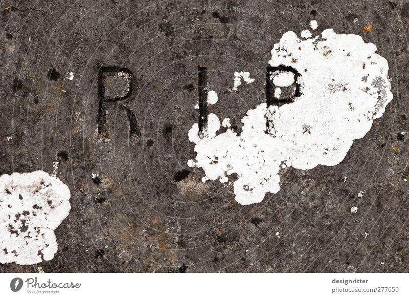 Die Ruhe nach dem Sturm alt Pflanze ruhig Tod Stein Schriftzeichen Buchstaben Vergänglichkeit Ende Frieden Verfall Typographie Friedhof Grabstein Aufschrift