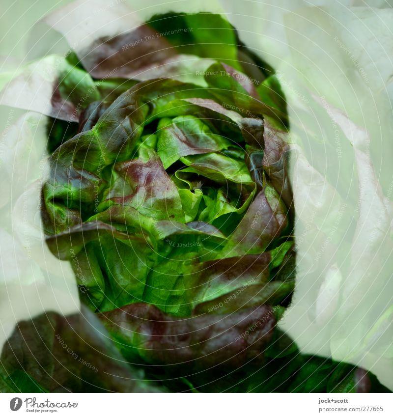 Butterhead Lebensmittel Salat Kopfsalat Ernährung Bioprodukte Mann 1 Mensch 30-45 Jahre Denken außergewöhnlich frisch grün Gefühle Identität einzigartig