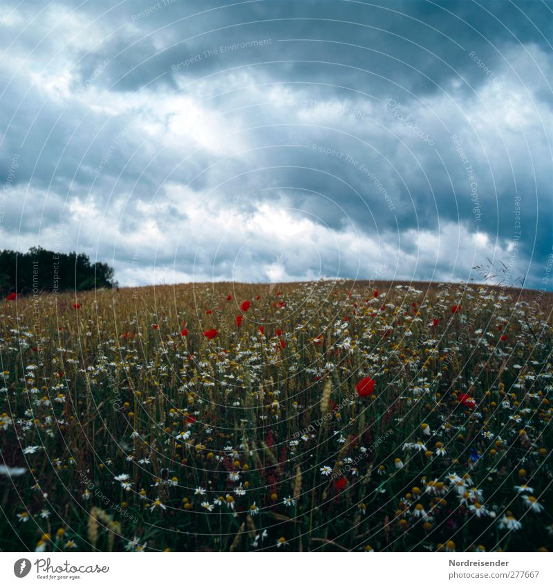 Der Planet ist rund Ausflug Sommer Landwirtschaft Forstwirtschaft Natur Landschaft Pflanze Urelemente Himmel Wolken Gewitterwolken Klima schlechtes Wetter