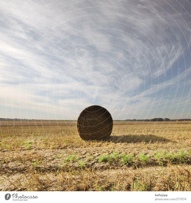 von der rolle Himmel Natur Sommer Landschaft Umwelt Horizont Arbeit & Erwerbstätigkeit Feld Erfolg Ernährung rund Landwirtschaft Beruf Ernte Wirtschaft