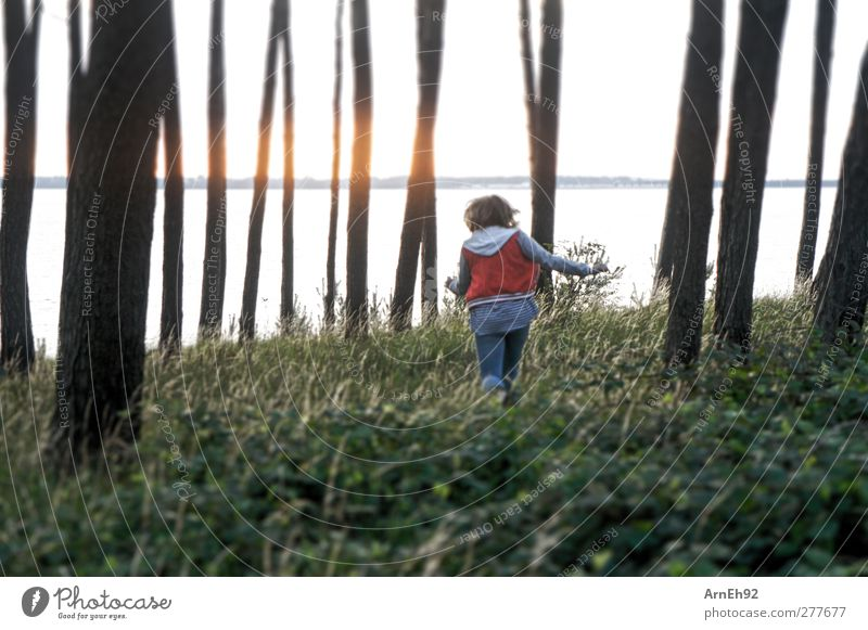 Waldlauf Junge Frau Jugendliche 1 Mensch Natur Baum Sträucher Grünpflanze Wildpflanze laufen Farbfoto Außenaufnahme Dämmerung Gegenlicht Starke Tiefenschärfe