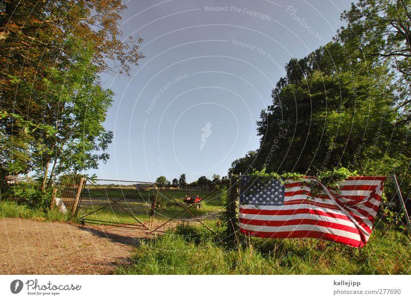 the wild, wild brandenburg Himmel grün Pflanze Wald Umwelt Wiese Feld Klima Lifestyle USA Fahne Tor Weide Zaun Amerika Wolkenloser Himmel