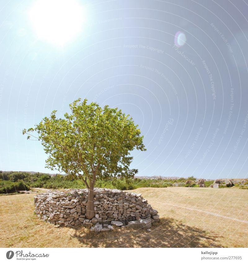 schattenplatz Natur Landschaft Himmel Wolkenloser Himmel Horizont Schönes Wetter Baum Ferne ruhig Steinmauer Steinhaufen grün Kroatien Reflexion & Spiegelung