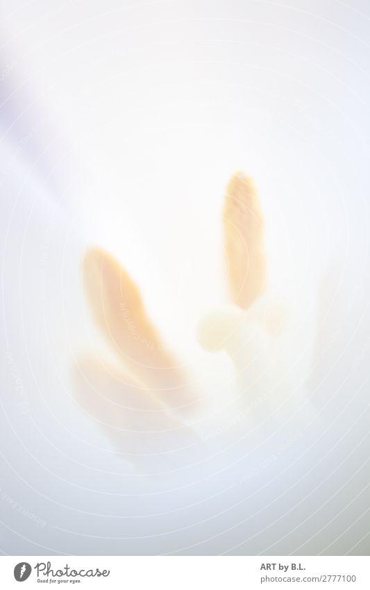 inside Natur Pflanze Blume beobachten berühren verblüht dünn einfach elegant Erotik weich gelb weiß erleben Erwartung Gefühle Farbfoto Gedeckte Farben