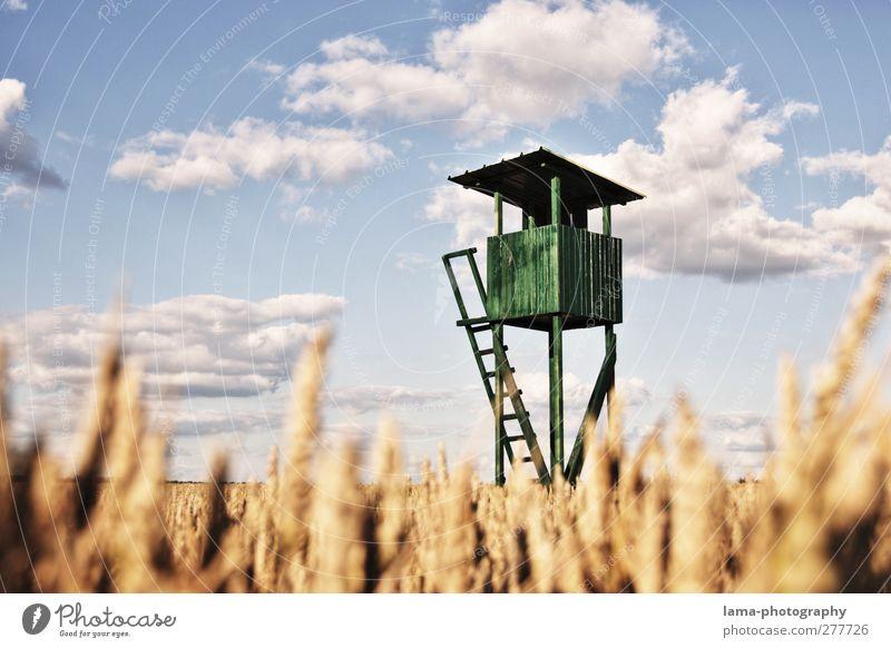 Aussichtspunkt Jäger Landwirtschaft Forstwirtschaft Wolken Sonnenlicht Schönes Wetter Weizen Weizenähre Feld Weizenfeld Hochsitz Jagd grün Ernte Farbfoto