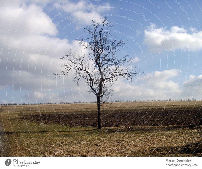 einsamer baum Himmel alt Baum Wolken Einsamkeit Horizont braun Weide April März Februar