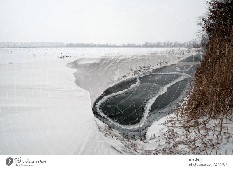 Vorfreude Himmel weiß Wolken Winter Landschaft Schnee Eis braun Feld Wetter Frost