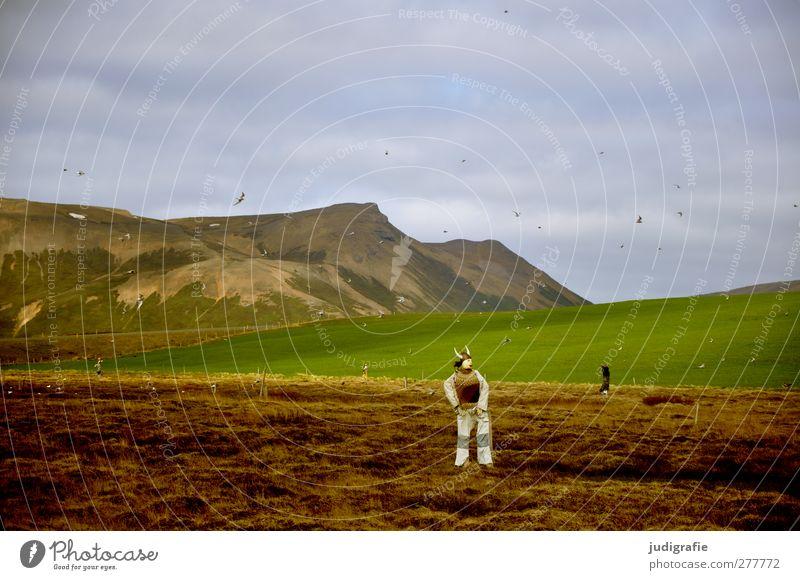 Island Umwelt Natur Landschaft Pflanze Tier Himmel Hügel Berge u. Gebirge Wildtier Vogel Schwarm Puppe Vogelscheuche fliegen stehen außergewöhnlich natürlich