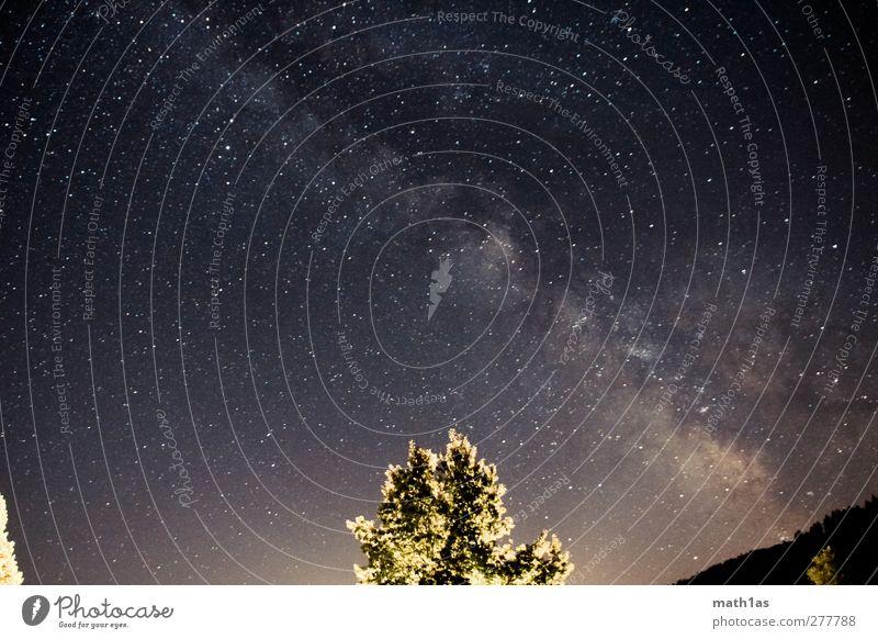 Milchstraße Sommer Baum träumen Stimmung Stern Weltall Überraschung Nachthimmel Galaxie Milchstrasse