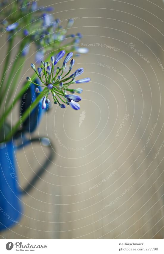 Stilleben Pflanze Blume Blüte zierlauch lauchblüte Kaffeekanne Kannen alt retro Blühend ästhetisch schön blau braun Zufriedenheit Farbfoto Innenaufnahme
