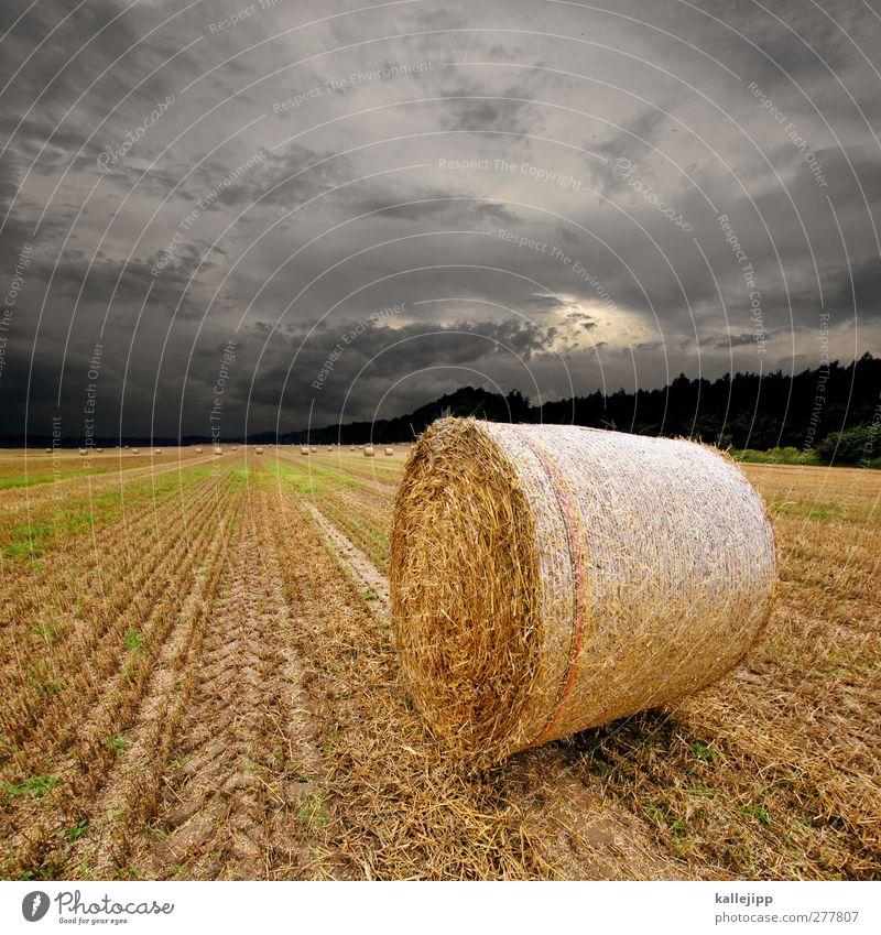 kornkreise Arbeit & Erwerbstätigkeit Beruf Wirtschaft Landwirtschaft Forstwirtschaft Umwelt Sommer Klima Unwetter Nutzpflanze Feld rund Ackerbau Getreide Rolle