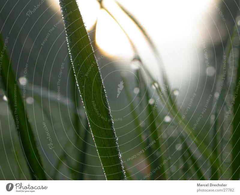 Morgentau Wasser grün kalt Gras Wassertropfen frisch Sauberkeit rein Klarheit Tau Halm