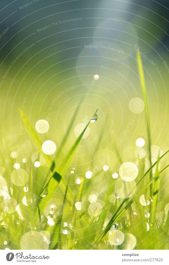 Simon & Gefunkel Garten Sonne Frühling Sommer glänzend Wachstum exotisch grün schön Idylle Tau Wiese Gras Halm Natur Umwelt Wassertropfen Reflexion & Spiegelung