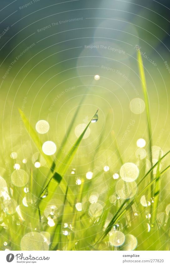 Simon & Gefunkel Natur grün schön Sommer Sonne Umwelt Wiese Gras Frühling Garten natürlich glänzend Wachstum Kreis Wassertropfen Idylle