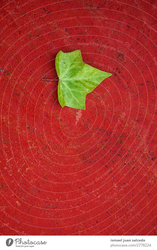 grünes Baumblatt Pflanze Blatt Garten geblümt Natur Dekoration & Verzierung abstrakt Konsistenz frisch Außenaufnahme Hintergrund Beautyfotografie