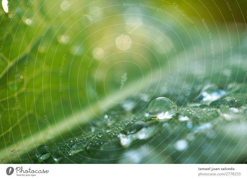 Tropfen auf den grünen Blättern Pflanze Blatt Regentropfen glänzend hell Garten geblümt Natur abstrakt Konsistenz frisch Außenaufnahme Hintergrund