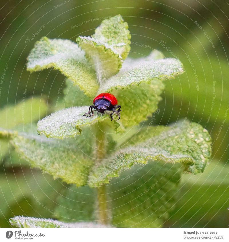 roter Käfer auf der Anlage Wanze Insekt Flügel Tier Pflanze Blume Garten Natur Außenaufnahme Hintergrund Beautyfotografie Zerbrechlichkeit elegant Blatt grün
