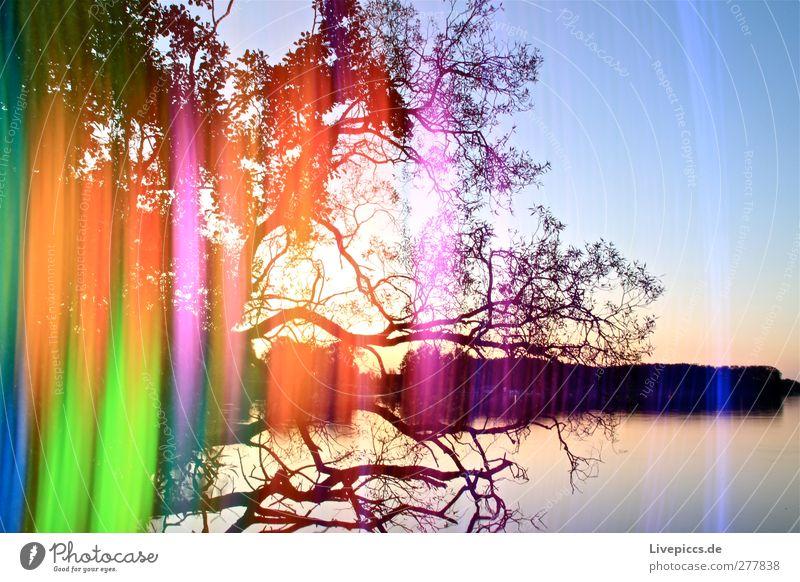 Müritzlicht Himmel Natur blau Wasser grün Sommer Baum Pflanze Sonne Blatt Küste See Kunst orange leuchten Seeufer
