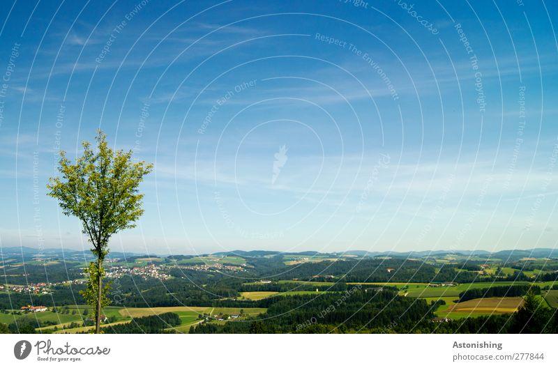 kleiner Baum Umwelt Natur Landschaft Pflanze Luft Himmel Wolken Sommer Klima Wetter Schönes Wetter Gras Wiese Feld Wald Hügel Dorf blau mehrfarbig grün schwarz