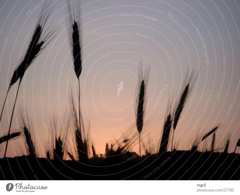 sunset Sonnenuntergang Feld Abenddämmerung Stimmung dunkel Getreide Himmel
