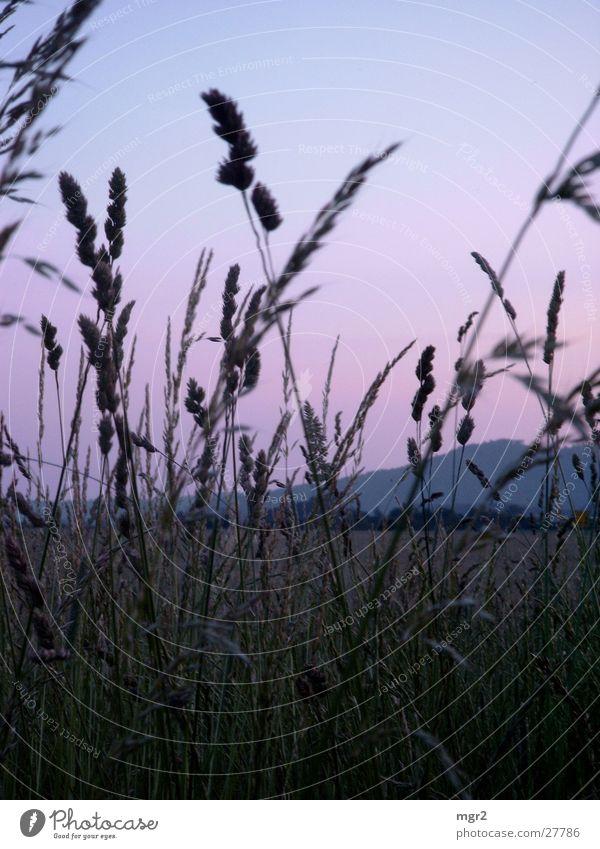 sunset II Abenddämmerung Sonnenuntergang Stimmung Gras Feld Wiese Himmel