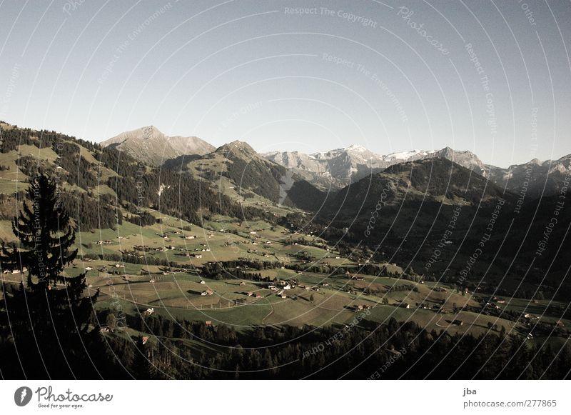 Abendlicht Erholung ruhig Tourismus Sommer Berge u. Gebirge wandern Natur Landschaft Wolkenloser Himmel Herbst Schönes Wetter Tanne Nadelwald Feld Wald Hügel
