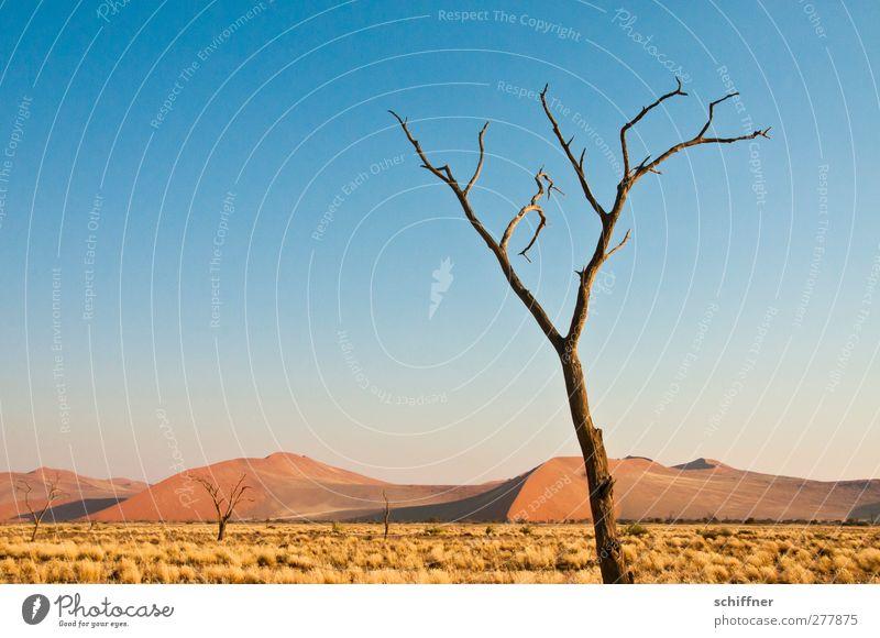 Waldsterben Umwelt Natur Landschaft Pflanze Wolkenloser Himmel Schönes Wetter Baum Wüste außergewöhnlich bedrohlich blau rot kahl Ast Baumstamm Düne Stranddüne