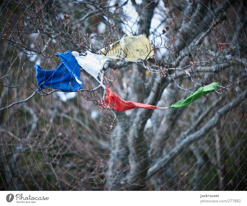 You Spin Me Round blau grün Baum rot Tier Frühling braun Dekoration & Verzierung authentisch hoch Ast einfach Vergänglichkeit rund Romantik Kitsch