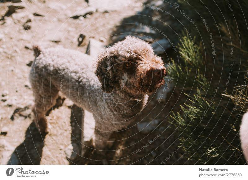 Ein Hund in den Bergen, der die Natur genießt. Lifestyle Freizeit & Hobby Abenteuer Freiheit Schnee Berge u. Gebirge Umwelt Landschaft Pflanze Tier Sonne Herbst
