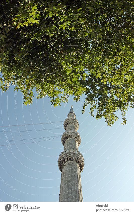 Ab ins Grüne Wolkenloser Himmel Blatt Istanbul Turm Minarett Sehenswürdigkeit Blaue Moschee Glaube Religion & Glaube Islam Farbfoto Außenaufnahme Menschenleer